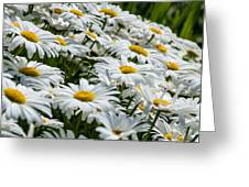 Dizzy With Daisies Greeting Card