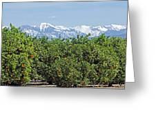 Dm6850-e Orange Grove And The Sierra Nevada Ca Greeting Card