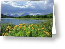 Dm9235 Mt. Moran From Oxbow Bend Greeting Card