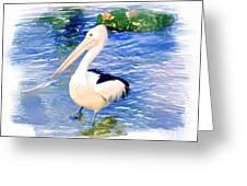Do-00088 Pelican Greeting Card