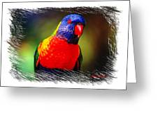 Do-00153 Colourful Lorikeet Greeting Card