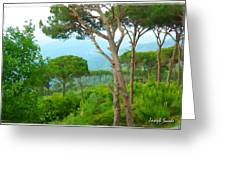 Do-00301 Pine Trees Forest In Aaraya Greeting Card
