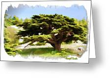 Do-00319 Cedar Tree Greeting Card