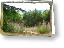 Do-00451 Cedar Trees Forest Greeting Card