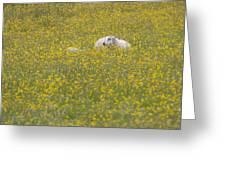 Do Ewe Like Buttercups? Greeting Card