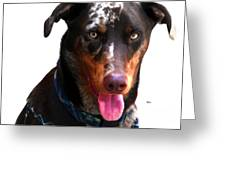 Doberman Australian Shepherd Cattle Dog  Greeting Card
