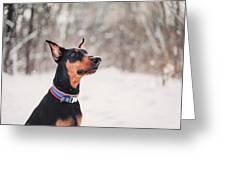 Doberman Snow Portrait Greeting Card