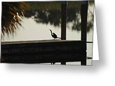 Dock Bird In Color Greeting Card
