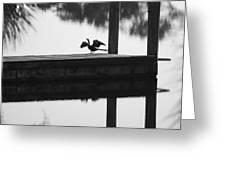 Dock Bird Pre Flight Greeting Card