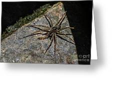 Dock Spider Greeting Card