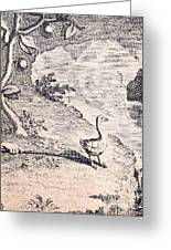 Dodo Bird, Hunted To Extinction Greeting Card