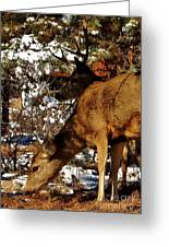 Doe And Buck Greeting Card