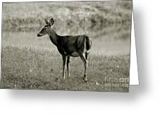 Doe By The Waters Edge Greeting Card