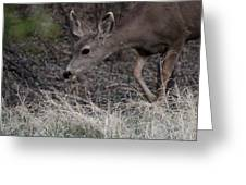 Doe Carefully Grazing In Tombstone Greeting Card