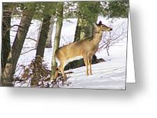 Doe Emerges Greeting Card