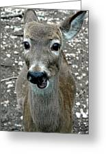 Doe Eyed Deer Talk Greeting Card