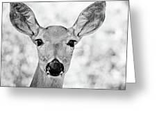 Doe Eyes - Bw Greeting Card