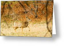 Doe High Stepping On Bald Mountain Greeting Card
