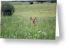 Doe In Grass Greeting Card