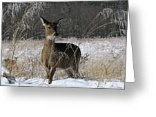 Doe In The Cove Greeting Card