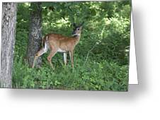 Doe In The Forest Greeting Card