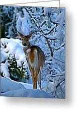 Doe In The Snow In Spokane 2 Greeting Card