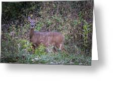 Doe In The Weeds Greeting Card