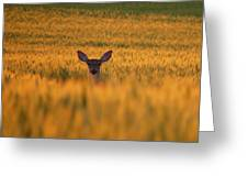 Doe In The Wheat Greeting Card