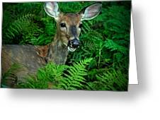 Doe In The Woods Greeting Card