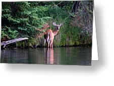 Doe In Water Greeting Card