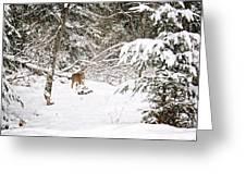 Doe In Winter Snow  Greeting Card