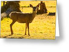 Doe Greeting Card