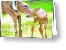 Doe Nuzzles Her Fawn Greeting Card