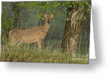 Doe On A Foggy Morning In Wyoming Greeting Card