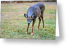 Doe Stomp Greeting Card