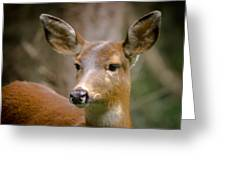 Doe With A Blaze Greeting Card