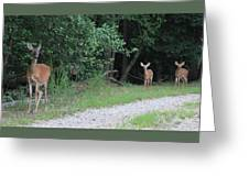 Doe With Twins Greeting Card