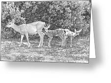 Doe With Twins Pencil Rendering Greeting Card