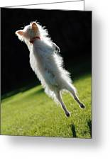 Dog - Jumping Greeting Card