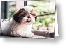 Dog 1 Greeting Card