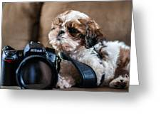 Dog 2 Greeting Card
