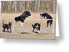 Dog 380 Greeting Card