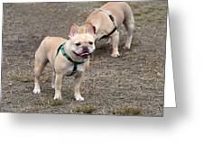 Dog 381 Greeting Card