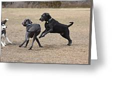 Dog 382 Greeting Card