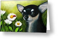 Dog 79 Chihuahua Greeting Card