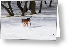 Dog And Winter Greeting Card