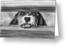 Dog At Gate Greeting Card