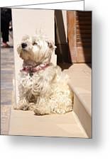 Dog Begging Greeting Card