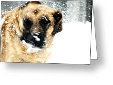 Dog Blizzard - German Shepherd Greeting Card