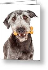 Dog Carrying Bone Biscuit In Mouth Greeting Card